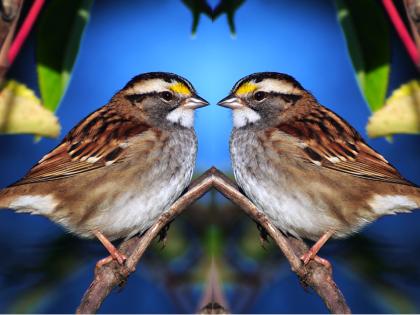 match_bird1