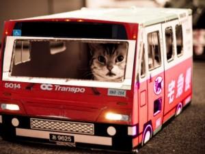 Transportation Quiz