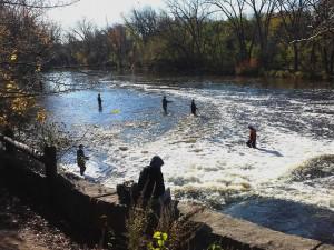 Using Nature to Mitigate Stormwater