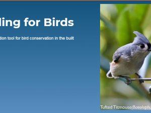 Evaluating impacts of subdivision designs on bird habitats