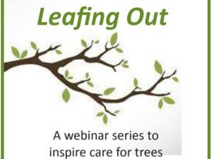 Leafing Out: A Webinar Series to Inspire Care for Trees – Watch Recordings Now
