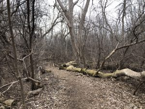 Abe's Arboretum Adventure Series – March 29, 2021