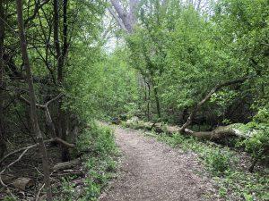 Abe's Arboretum Adventure – May 10, 2021